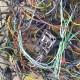 Hard Wiring Vs. Soft Wiring